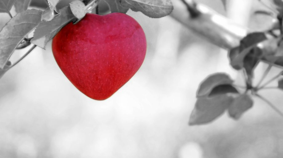 bello amor