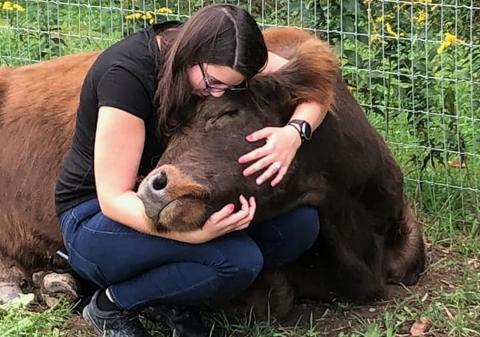 Abrazar vacas reduce el estrés y aumenta la positividad