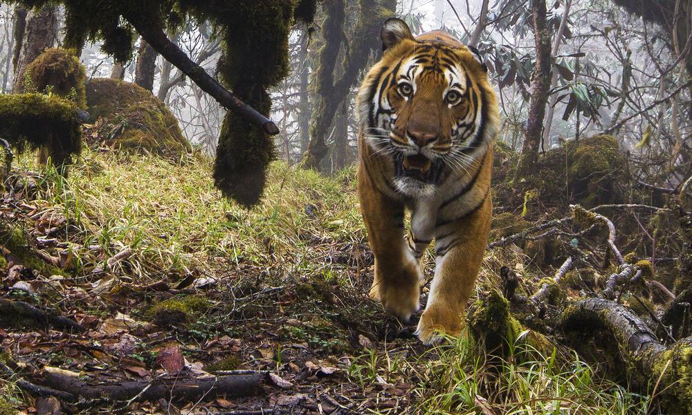 El poder del tigre y la inteligencia del zorro