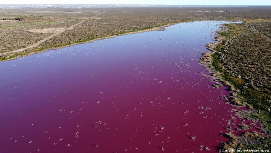 La polución de la industria pesquera tiño de rosa una laguna patagónica